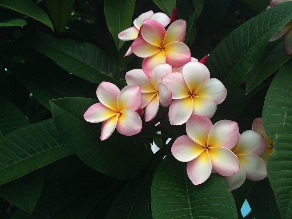 Egzotikus növényvilág