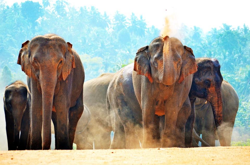 Elefántárvaház