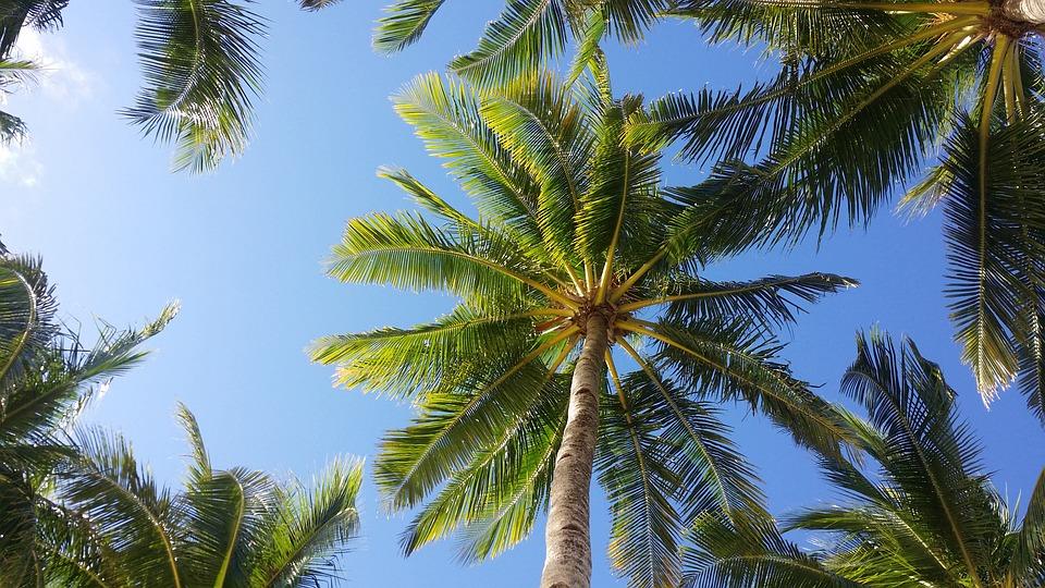 palma-2065658_960_720.jpg